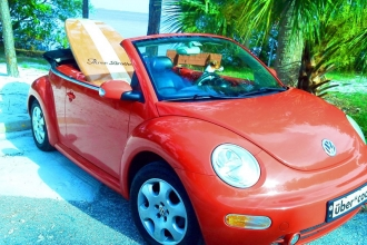 Three Brothers Boards Beetle